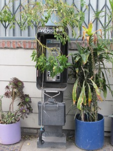 Pay phone overgrowth