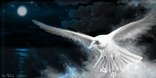 White Raven (source: photobucket)