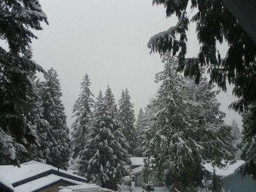 February Snow 1