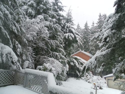 February Snow 3