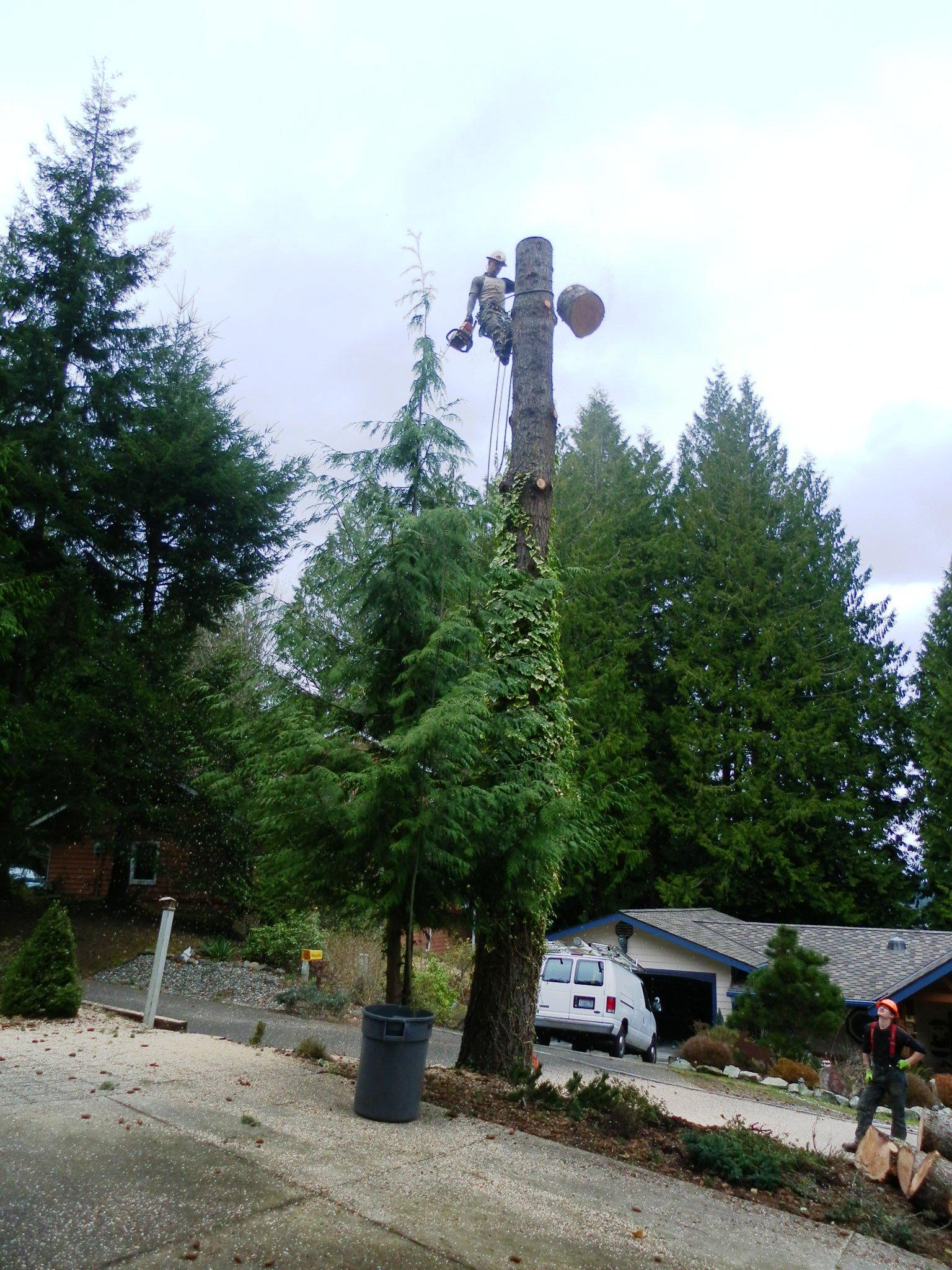 Tree Chopping